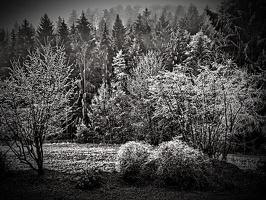 Dramatic Black & White_1546208300124.jpg
